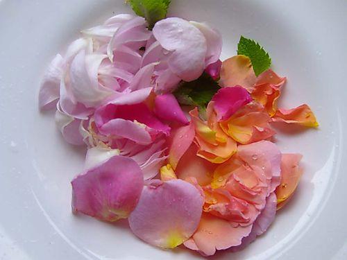 Rose petals 12