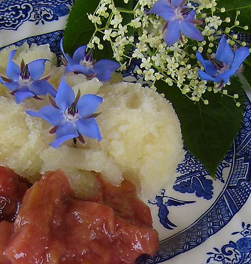 Elder flower sorbet with rhubarb86