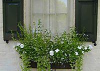 Charleston window box 95