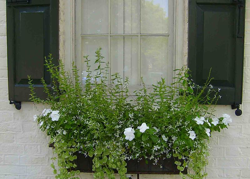 Charleston window box 95