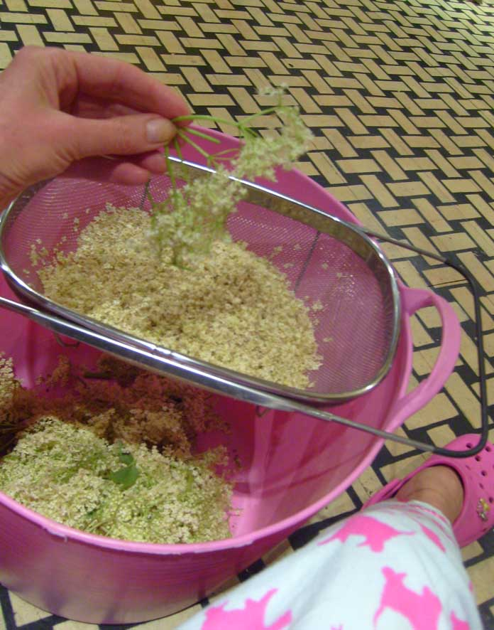 Plucking elderflower 77