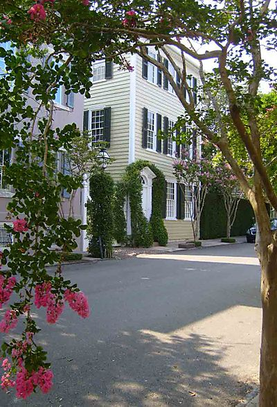 Crepe myrtles trees Charleston 25