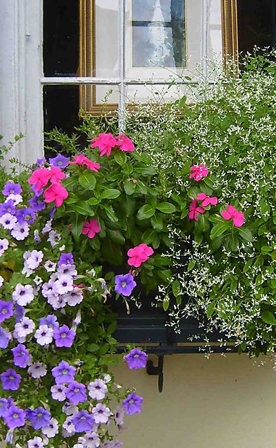 Charleston window box 33