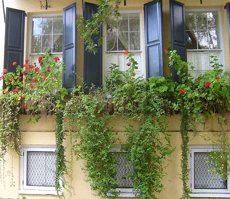 Window boxes 22