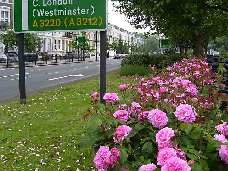 Roses on Cromwell Road 95