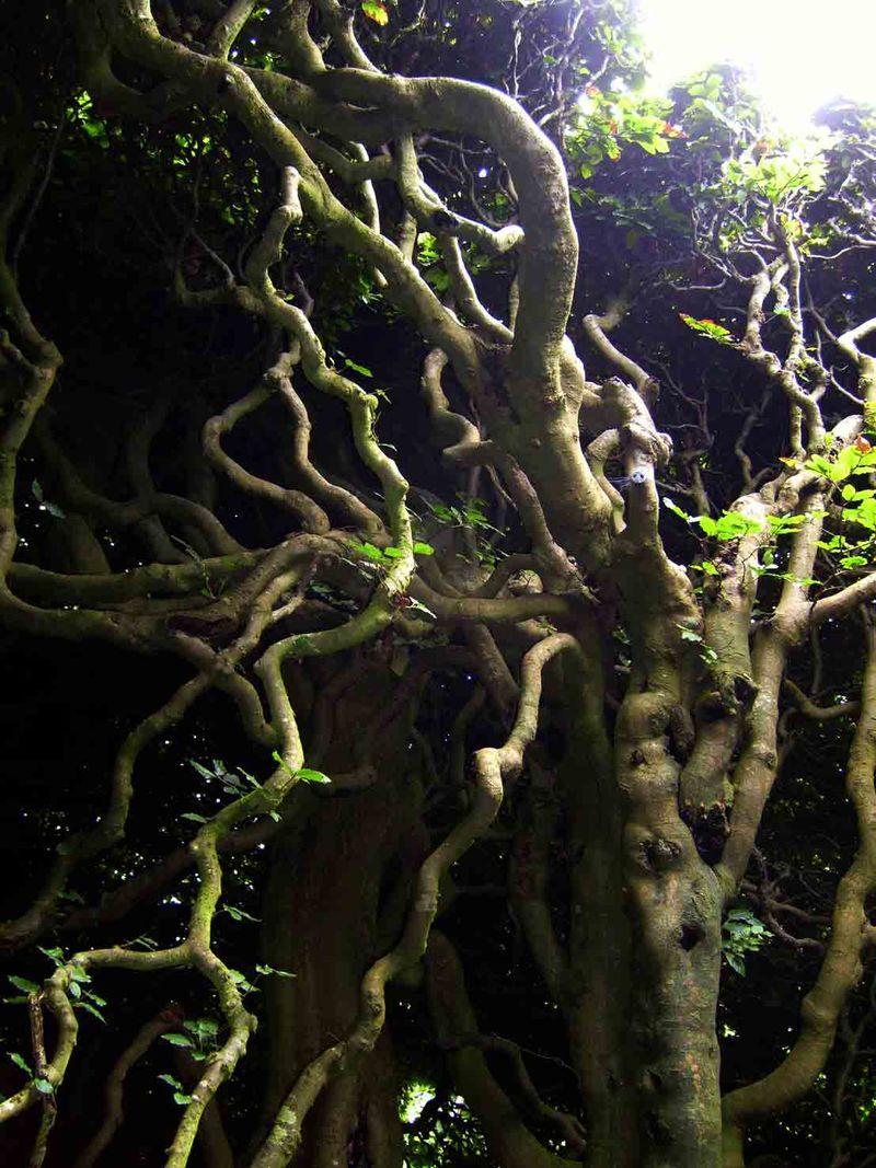 Levens trees28-dark
