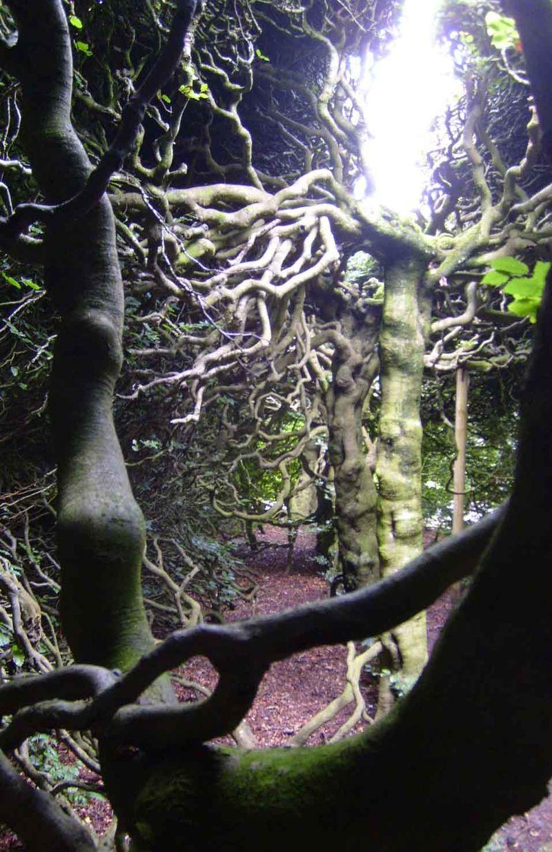 Levens trees 49