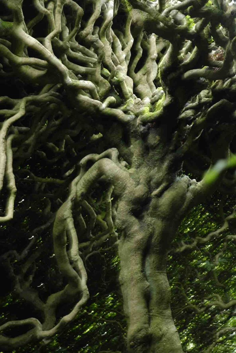 Levens trees10