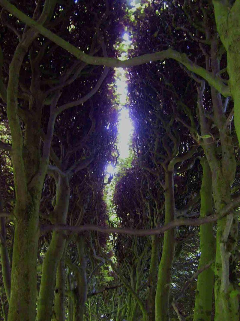 Levens trees tweaked