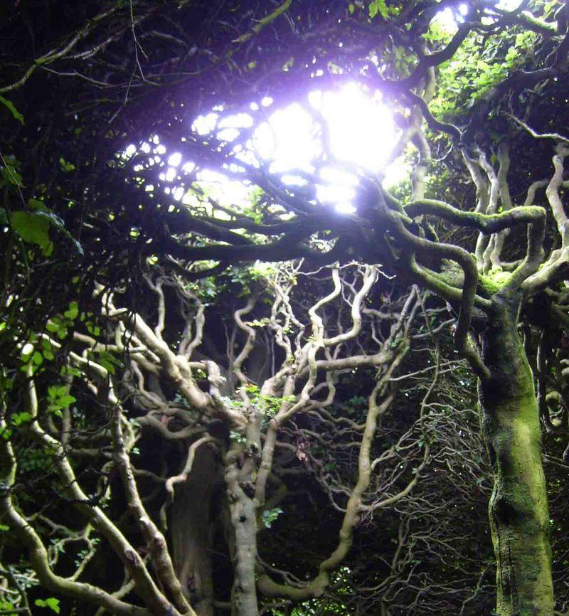 Levens trees 26