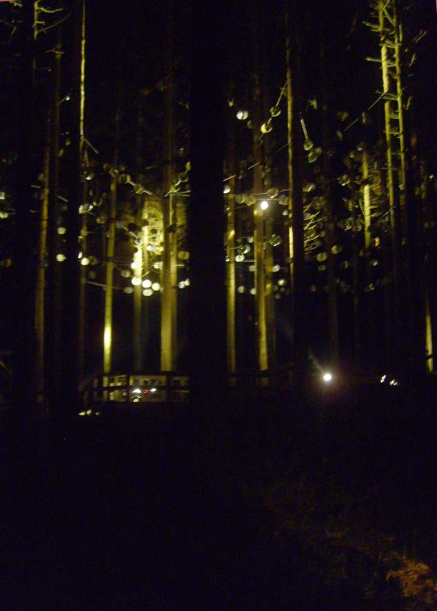 Silver discs at Kielder forest13