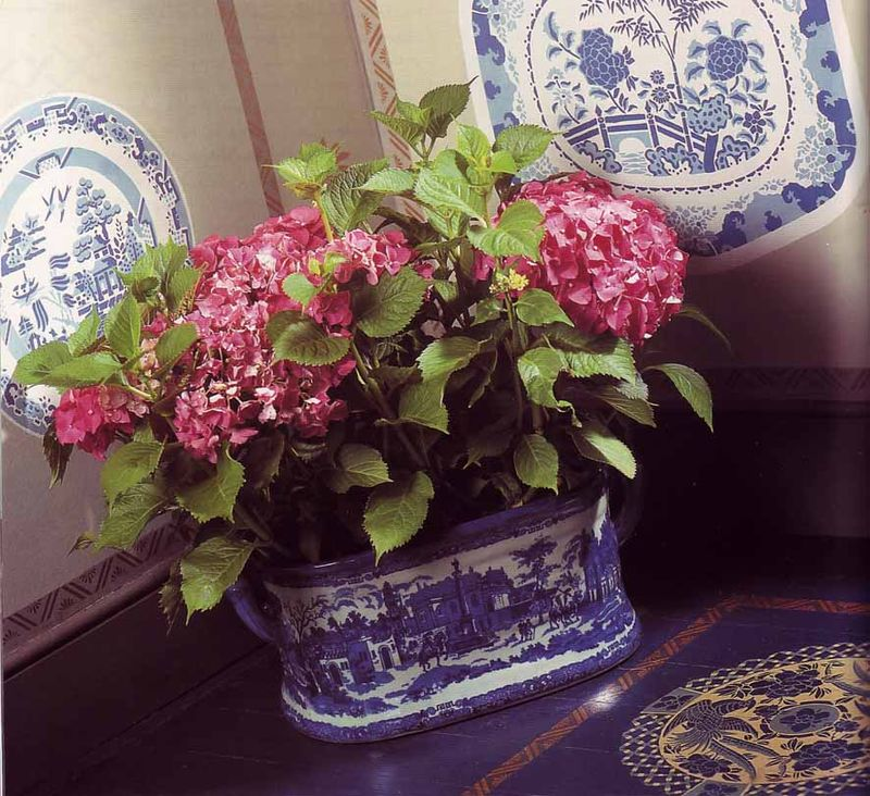 Stencilled plates from stencilled home