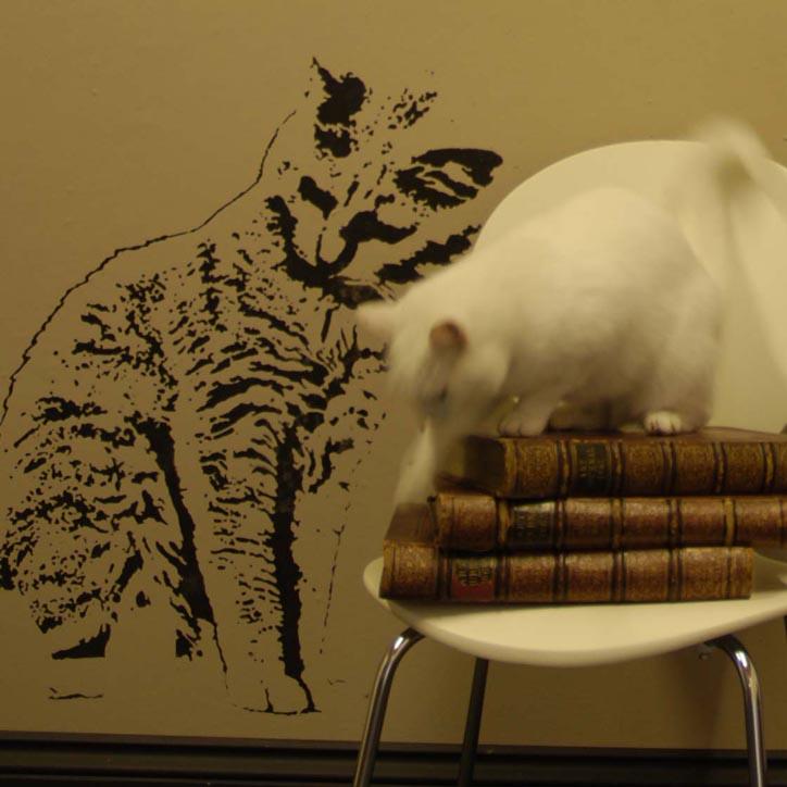 Cat stencil Spike 42