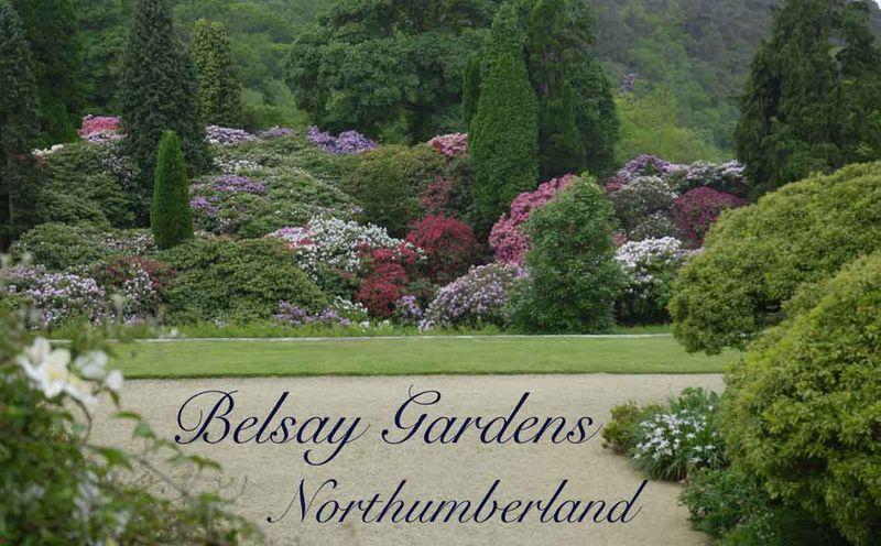 Belsay Gardens 25