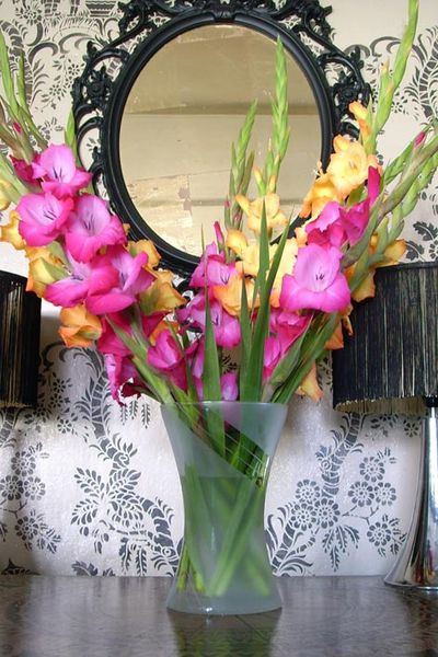 Gladioli at Stocksfield hall 37