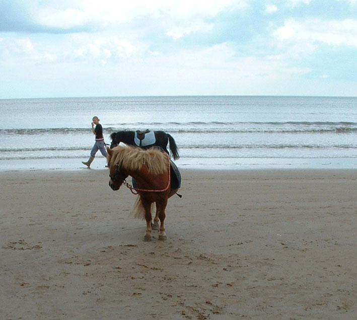 Lone pony bridlington H morris