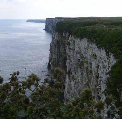 Cliffs yorkshire coast