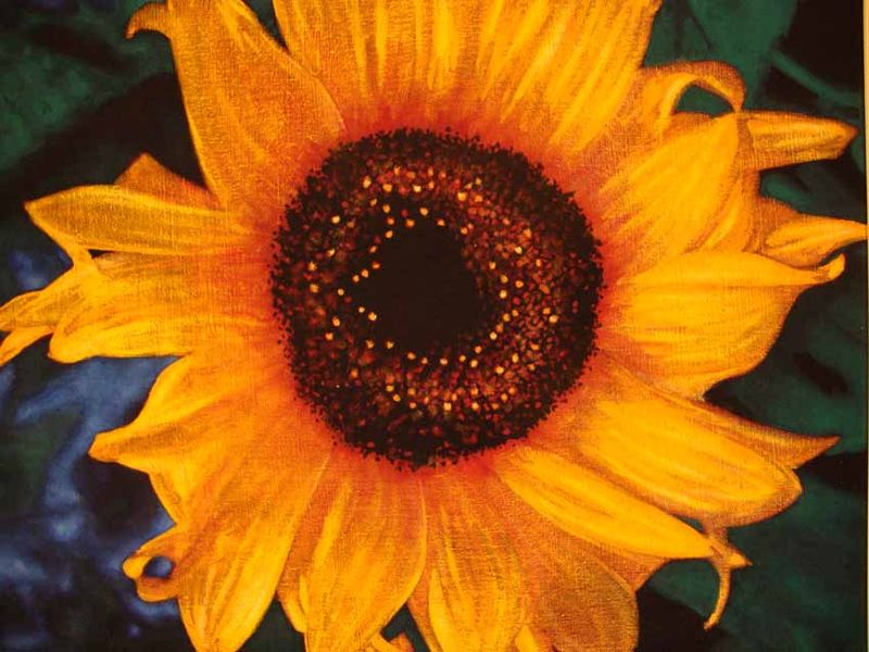 Art tour chippendale sunflower 26