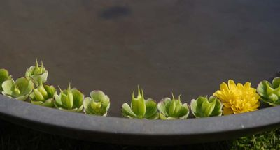 Floating flowers 29