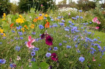 Garden flowers stocksfield16