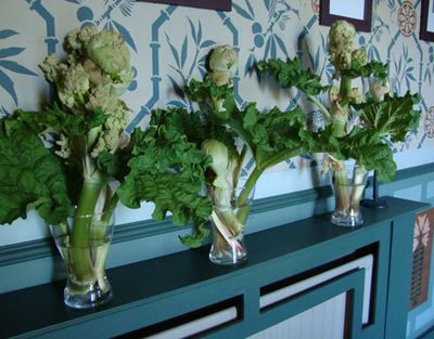 Rhubarb flowers in vase74