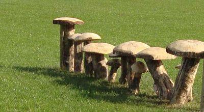 Bywell horses mushroom 44