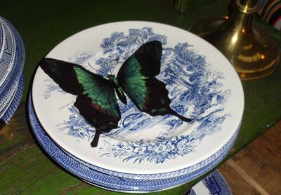 Butterfly plate 950 cropped