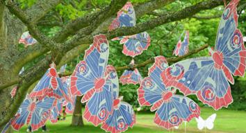 Bywell butterflies 038