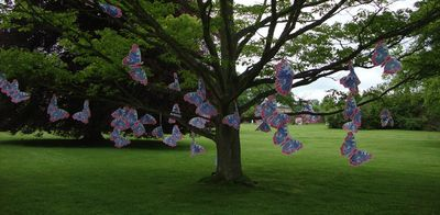 Butterfly tree bywell hall long 76