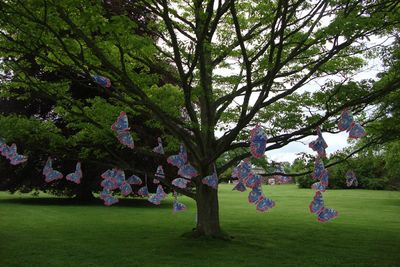 Butterfly  tree bywell hall 76