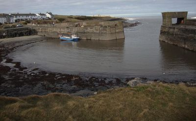 Craster harbour 39