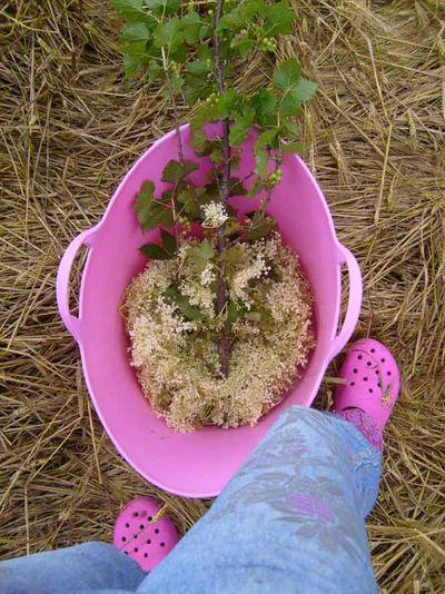 Elderflower harvest & stencilled jeans70