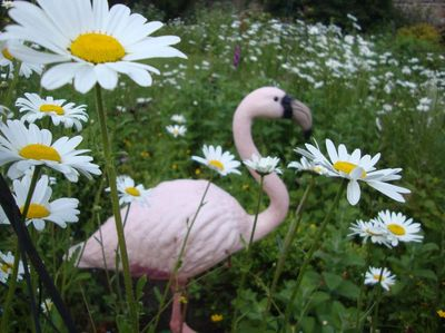 Flamingo with daisies.017