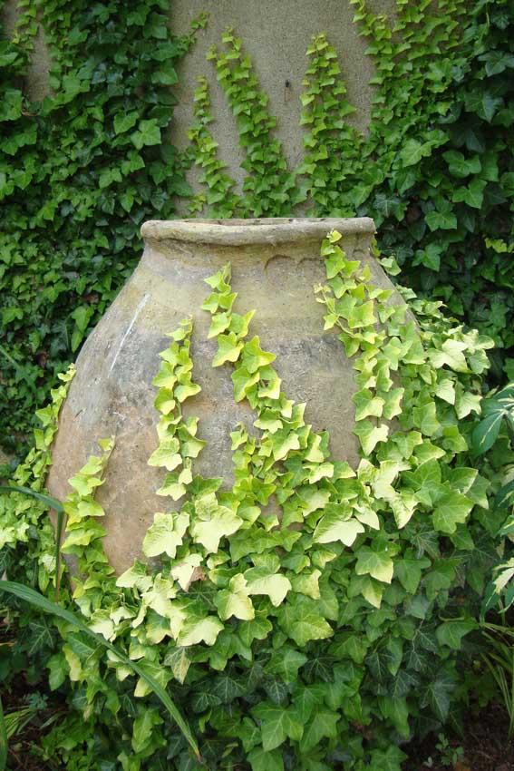 1 pot and ivy chanticleer995