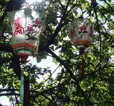 Lanterns in trees 275