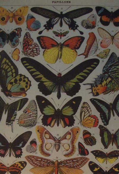Butterflies at re-found
