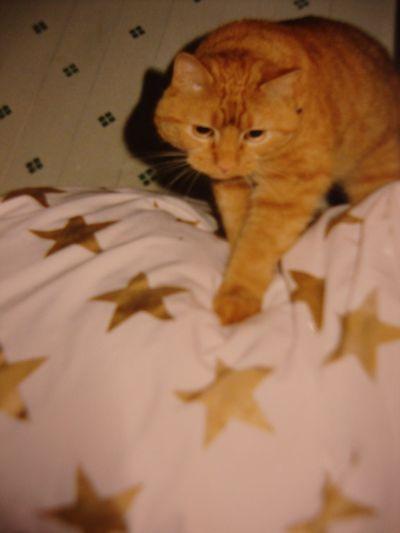 5 point star stencil 35
