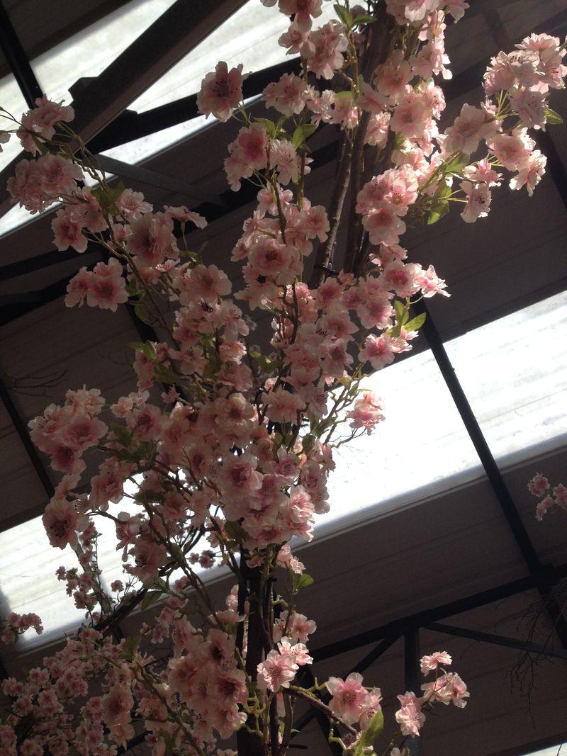 Cherry blossom overhead