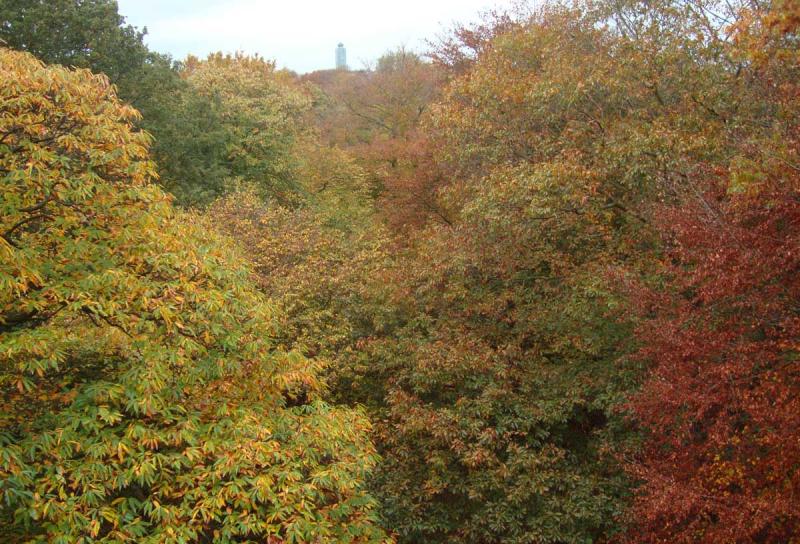 Treetops47