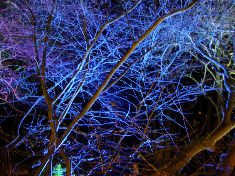 Illuminated tree belsay hall.400