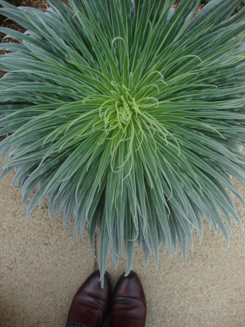 2a spiky plant kew39