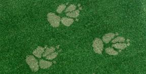 Wolfhound print