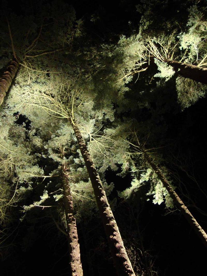Iluminated tree belsay hall39