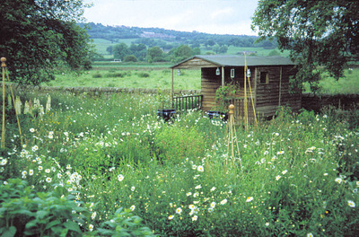 Shed_in_orchard