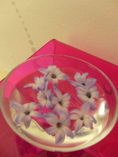 Hyacinth_em97