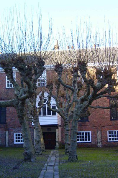 York_tortured_trees_em28